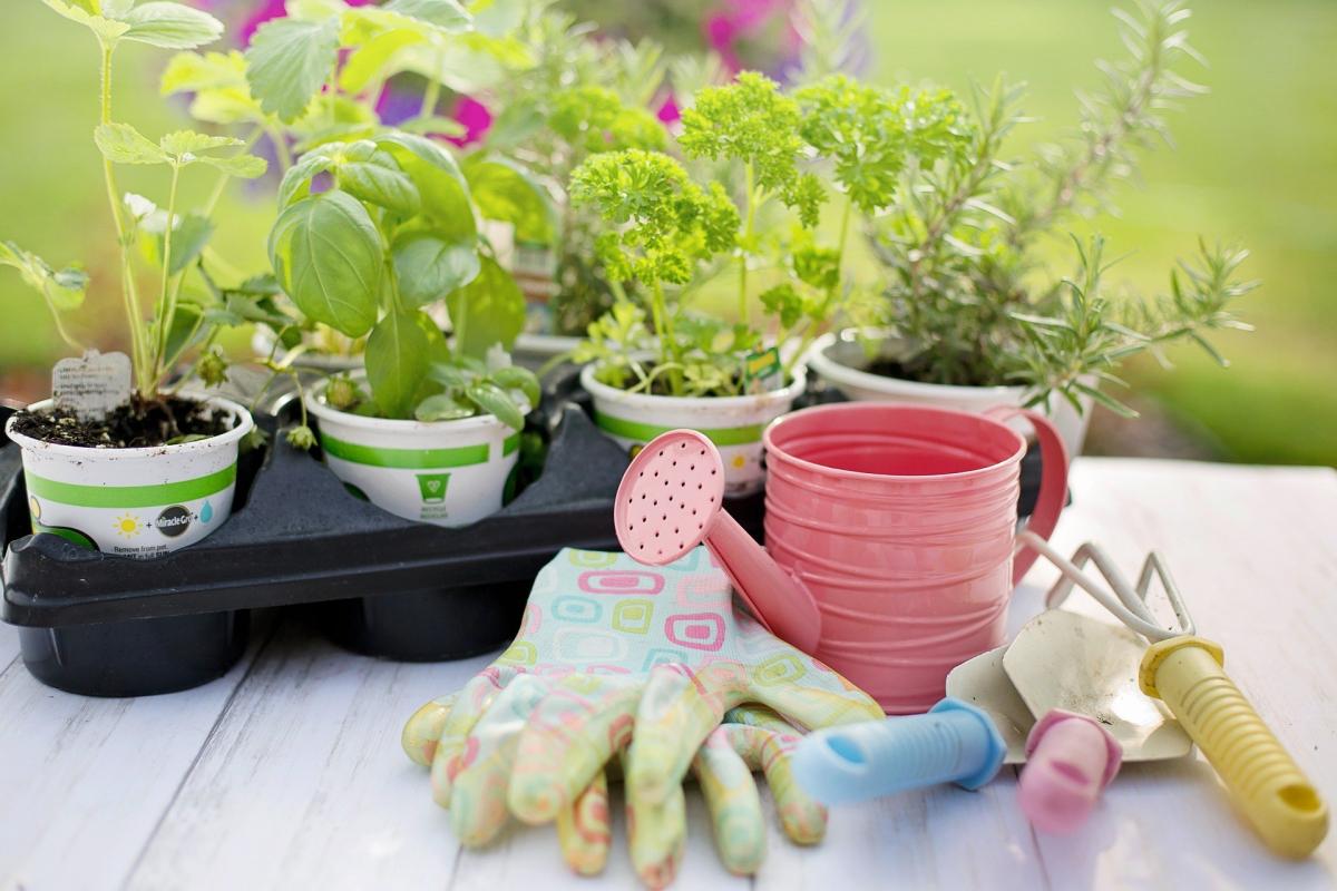 plantas-para-su-cuidado-5d301fbce6ecb